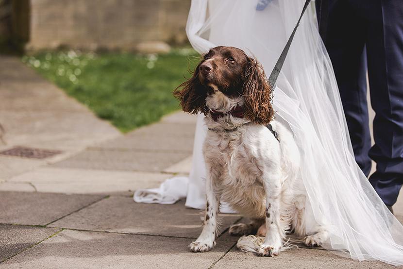 dog wedding gues