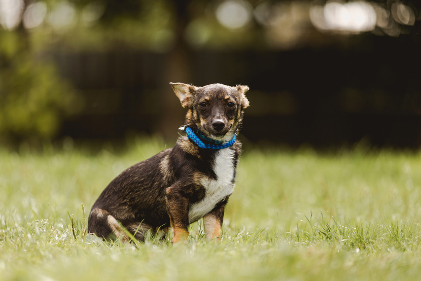 Wallace dog rehoming photographs