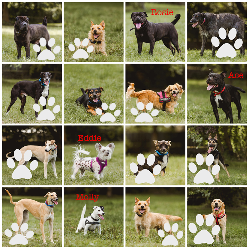 dogs to be rehomed collage
