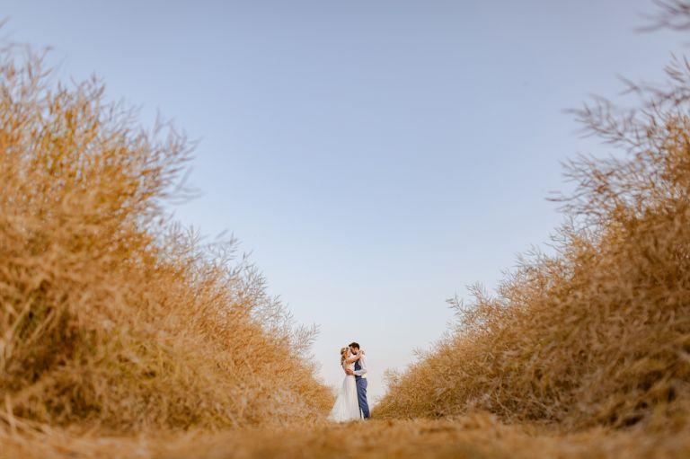 bride and groom in cornfield